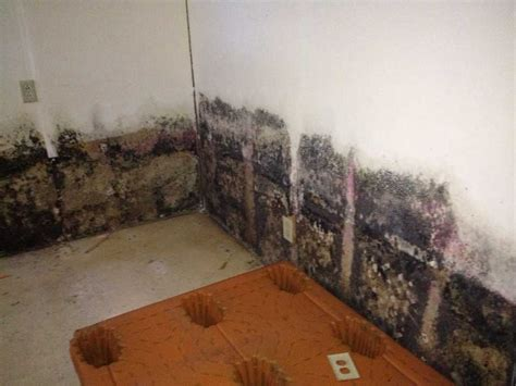 black mold in basement after flooding new basement and