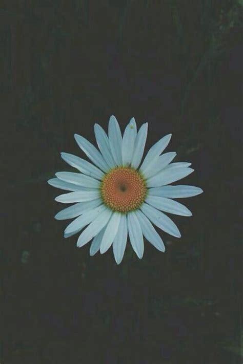 wallpaper tumblr daisy daisy screen tumblr