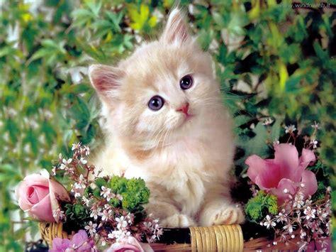 fiori con e logopsicosofia gatti e fiori