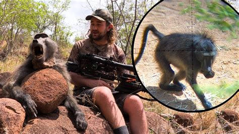 baboon hunt   crossbow mission   youtube