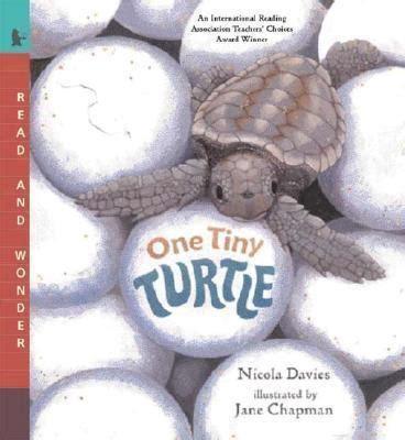 One Tiny Turtle Read And one tiny turtle davies nicola 9780763623111