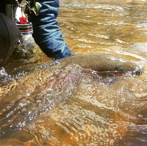 fly fishing tips archives colorado winter fly fishing tips archives colorado fly fishing
