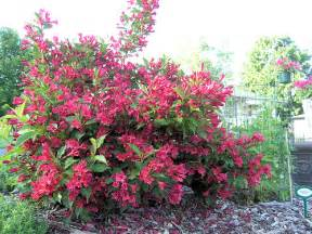 Shrubs To Plant In Fall » Ideas Home Design