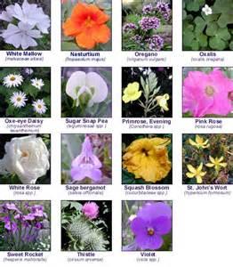 Wild Flower Meadow Seeds - edible flowers