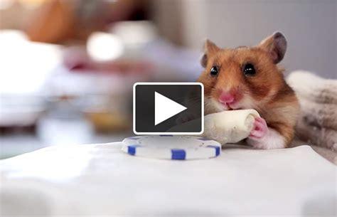 hamsters x mobile 187 x hamsters videogreenip eugreenip eu