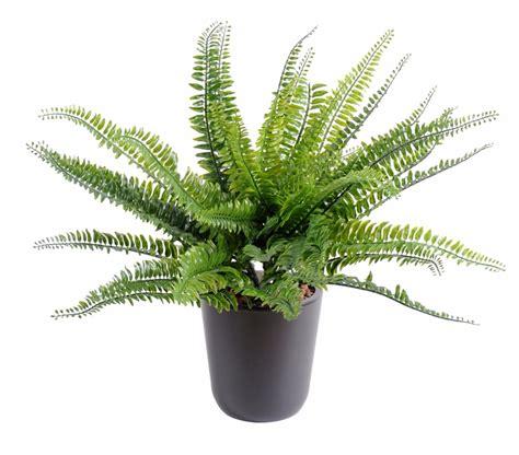 plante artificielle foug 232 re boston plastique en piquet int 233 rieur ext 233 rieur h 40cm vert