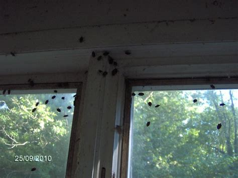 stink bugs in house stink bugs in house 28 images beyond pearls ode to a stink bug stink bug in the