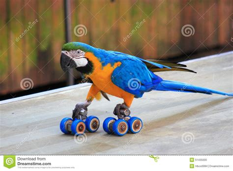 parrot skating show stock photo image 51435000