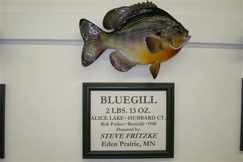 Minnesota Records Fishing Museum Gallery Gift Shop Mn Fishing Artifacts Fishing Boats Record Fish