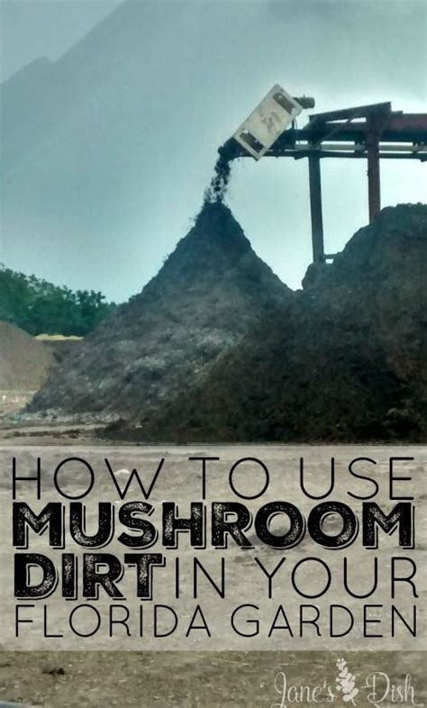 mushroom dirt   garden garden ideas