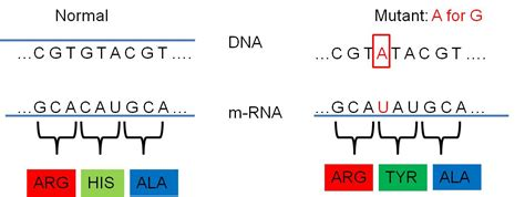 What Are Neutral Mutations 11photo