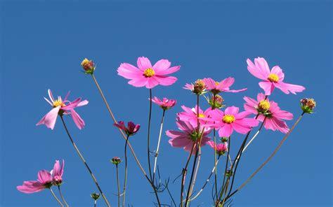 flower hds 1080p walldevil