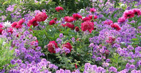 Blumen Stauden Halbschatten by Stauden F 252 R Lehmboden Mein Sch 246 Ner Garten