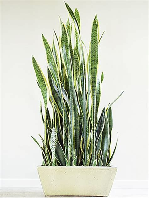 easy indoor plants 25 best ideas about small indoor plants on pinterest