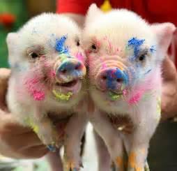 adorable paint splattered piglet animals colorful cute image 37728 favim