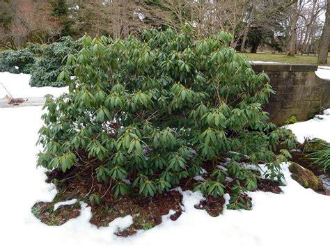 Winterharte Pflanzen Immergr N 1273 by Immergr 252 Ne Pflanzen Winterhart Gartenpflanzen Winterhart