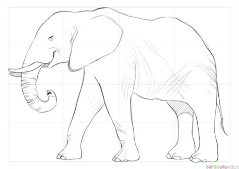 Drawing Elephant by How To Draw An Elephant Step By Step Drawing