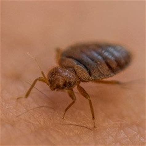 bed bug treatments that work why bed bug heat treatments work copesan