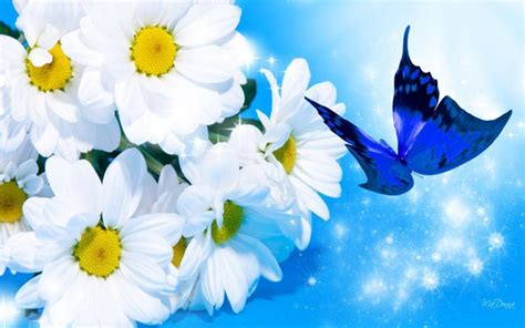 Gamis Ve Mawar 958mwr Blue Hd Blue Wallpaper Free 50761