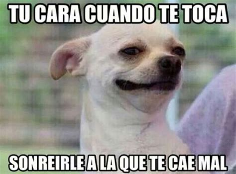 Chihuahua Meme - image gallery meme perro