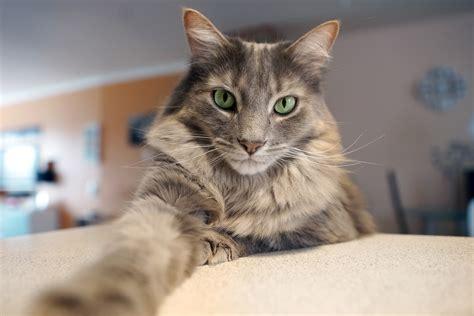 cat voice cat fools bank s voice biometric system fintech futures