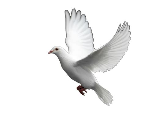 images of doves dove doves free images at clker vector clip
