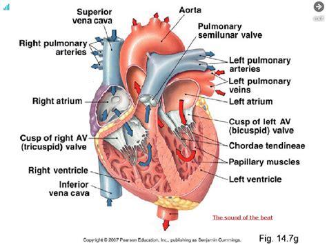 inside diagram inside the diagram anatomy organ