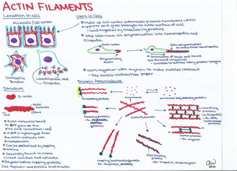 Cell biology study guides ashley s biology study guides