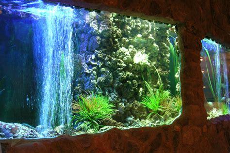 acquari d arredo acquario arredo idee per un acquario in casa designbuzz