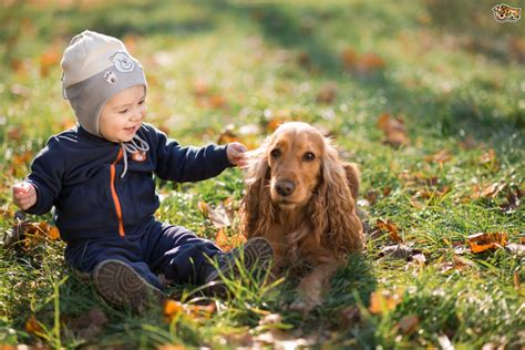 puppies and toddlers teaching your children to respect your pets4homes