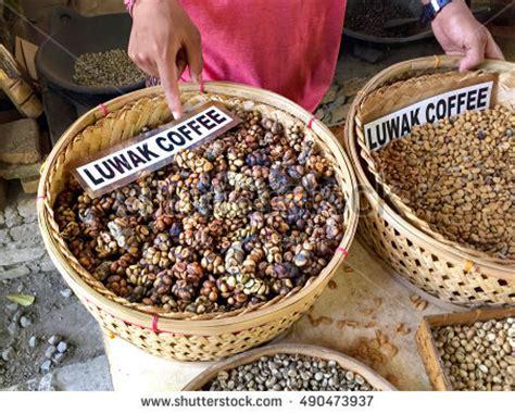 Lukisan Kopi Artwork Coffee 1 luwak stock images royalty free images vectors