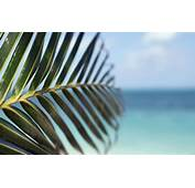 Water Leaf Beach Tropical Palm Trees Depth Field Sea