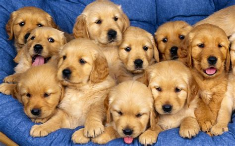 adorable puppys puppies puppies wallpaper 22040946 fanpop