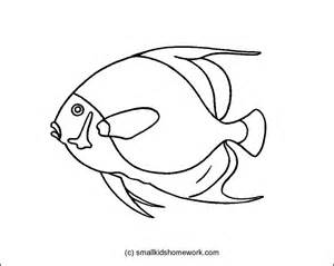 French Angel Fish Outline Picture Outline Pictures Fish Outline Coloring Page