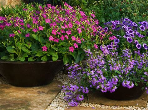partial shade flowering shrubs shade garden ideas hgtv