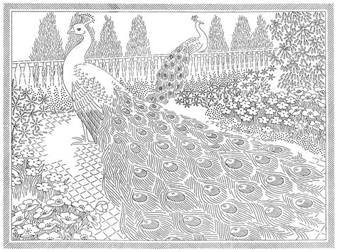 vintage pattern colouring book laura wheeler transfer 777 peacocks peacock pencil