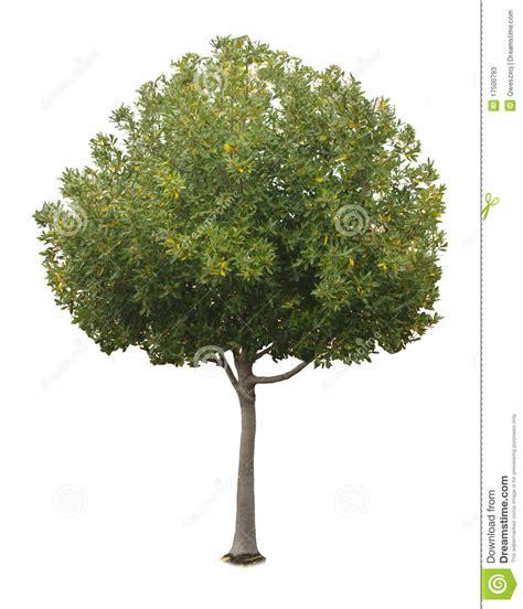 een dierenspeciaalzaak met een u een boom met een witte achtergrond no12 stock afbeelding