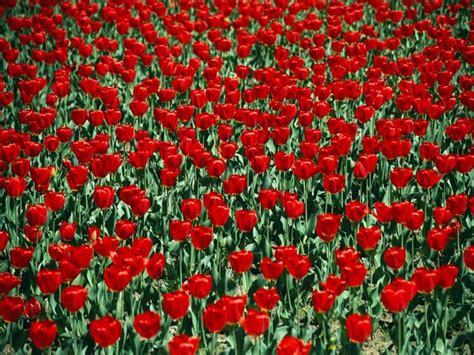 arte fiori foto arte di natura fiori 16 di 18 national geographic