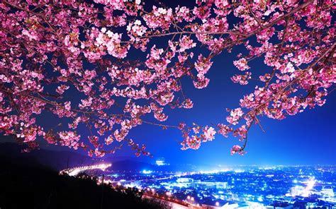 imagenes de japon de noche mimura jap 243 n sakura flor de cerezo carretera ciudad