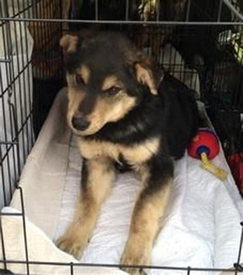 rez rescue pine home and animal rescue on