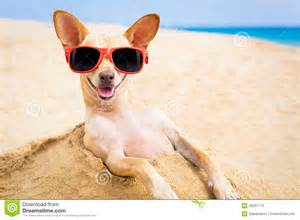 cool dog at the beach stock photo image 45231770