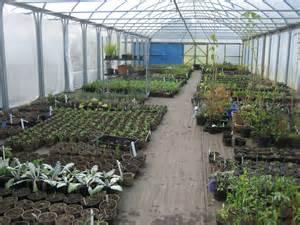 Garden Nursery by Volunteer Nt Mount Stewart Volunteer S Garden Diary