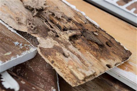 termite custom woodworks custom deck design archives albaugh sons