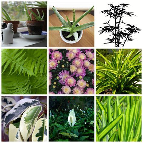 piante da interno purificano l piante da appartamento purificano l e non muoiono mai