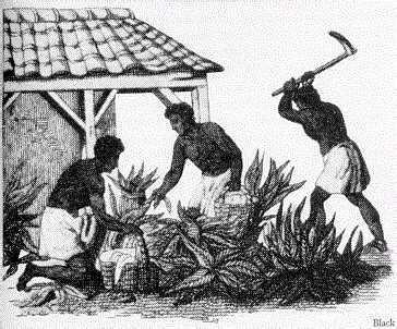Southern Planters Considered Their Slaves To Be by Colonialdiseasedigitaltextbook 7 Disease And The