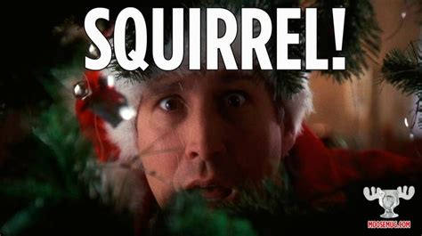 Christmas Vacation Meme - squirrel christmas vacation quote classic movie
