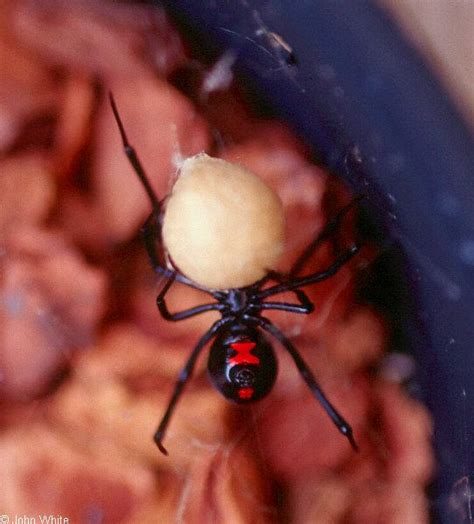 Up Side Scorpion Moge Brown 13 best images about spiders and snaks on outdoor patios hanging and