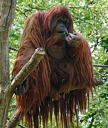 zoologischer garten chicken discworld wikiquote