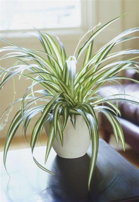 plants  dont  light   grow indoors
