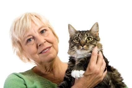 gatti sterilizzati alimentazione croccantini gatti cibo gatti